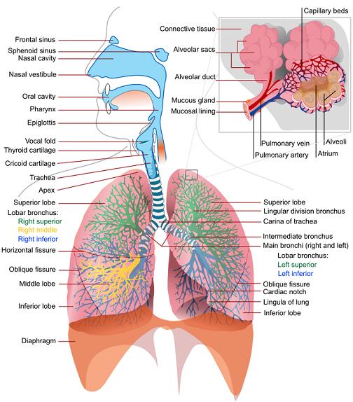 Respiratory Methodology
